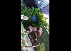 Video casal real flagrados transando no jardim da rua